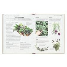 Petit guide des herbes aromatiques