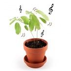 Kit de plantation la plante qui danse