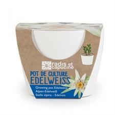Pot de culture pour edelweiss